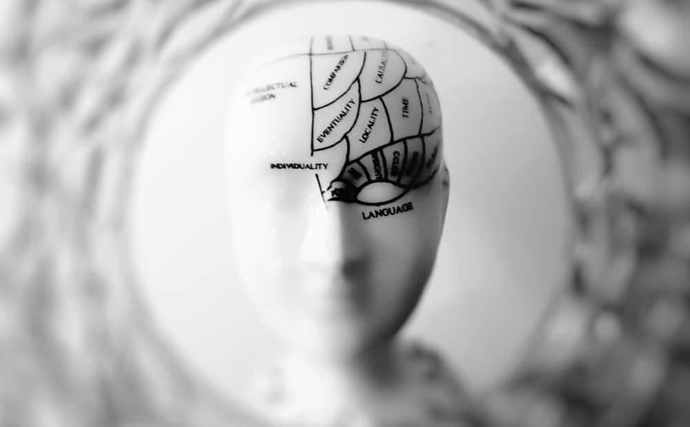 Les neurosciences et la neuro-éducation